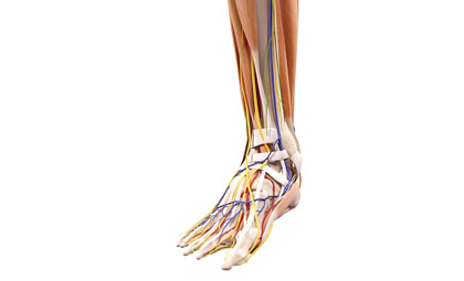 Peripheral-Artery-Disease-Los-Angeles-Foot-and-Ankle-Surgeon-1